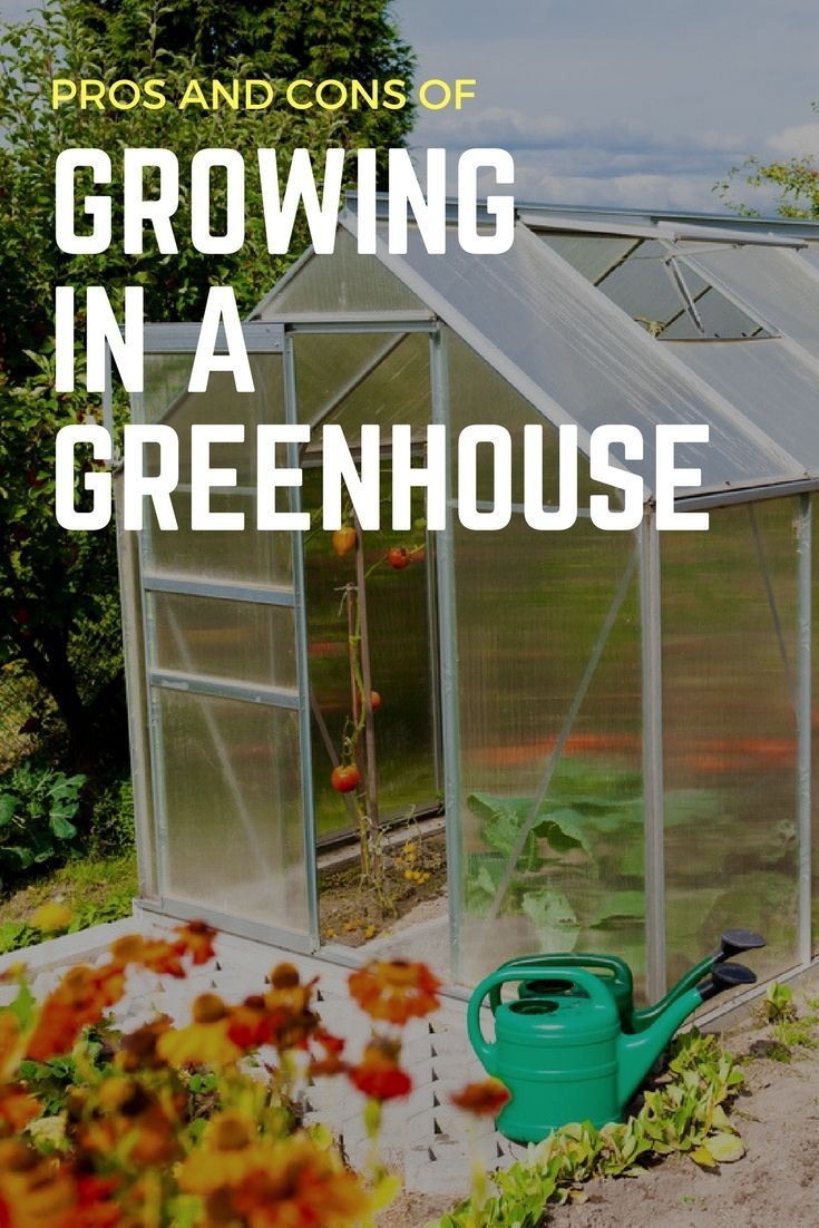 Pros And Cons Of Growing In A Greenhouse - Gardening Know How\'s Blog ...