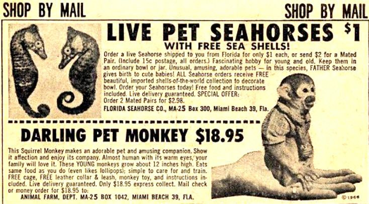 The 50s Were A Wacky Time With Images Pet Monkey Pet