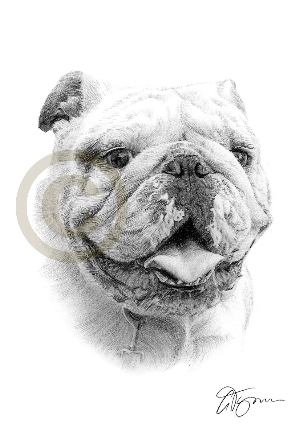 English bulldog pencil drawing by artist gary tymon