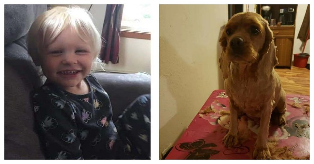 Missing 3 Year Old Found Safe With Family Dog After Spending 24 Hours In The Woods The Animal Rescue Site Blog In 2020 Family Dogs Animal Rescue Site Family Pet