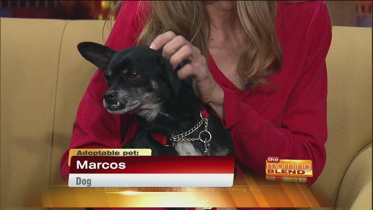 Pima Paws For Life events Paw, Dog adoption, Pets