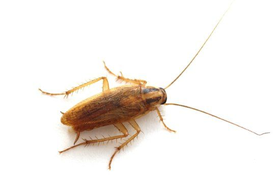 Man Has Cockroach Pulled From Ear In 10 Minute Procedure Because