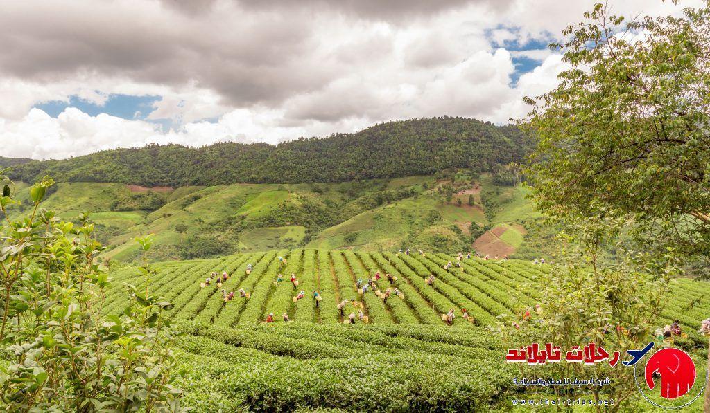 الريف التايلاندي وسياحة لا تنسي في الطبيعة الخلابة Thai Travel Trip Outdoor