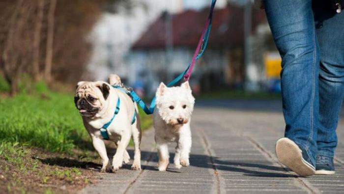Corona Ausgangssperre Hundespaziergang