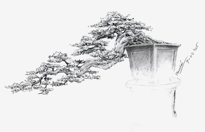 bonsai drawing