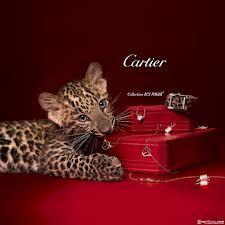 Cartier - Wanneer het klasse moet zijn.