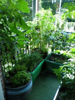 Photo of Make a garden on your balcony