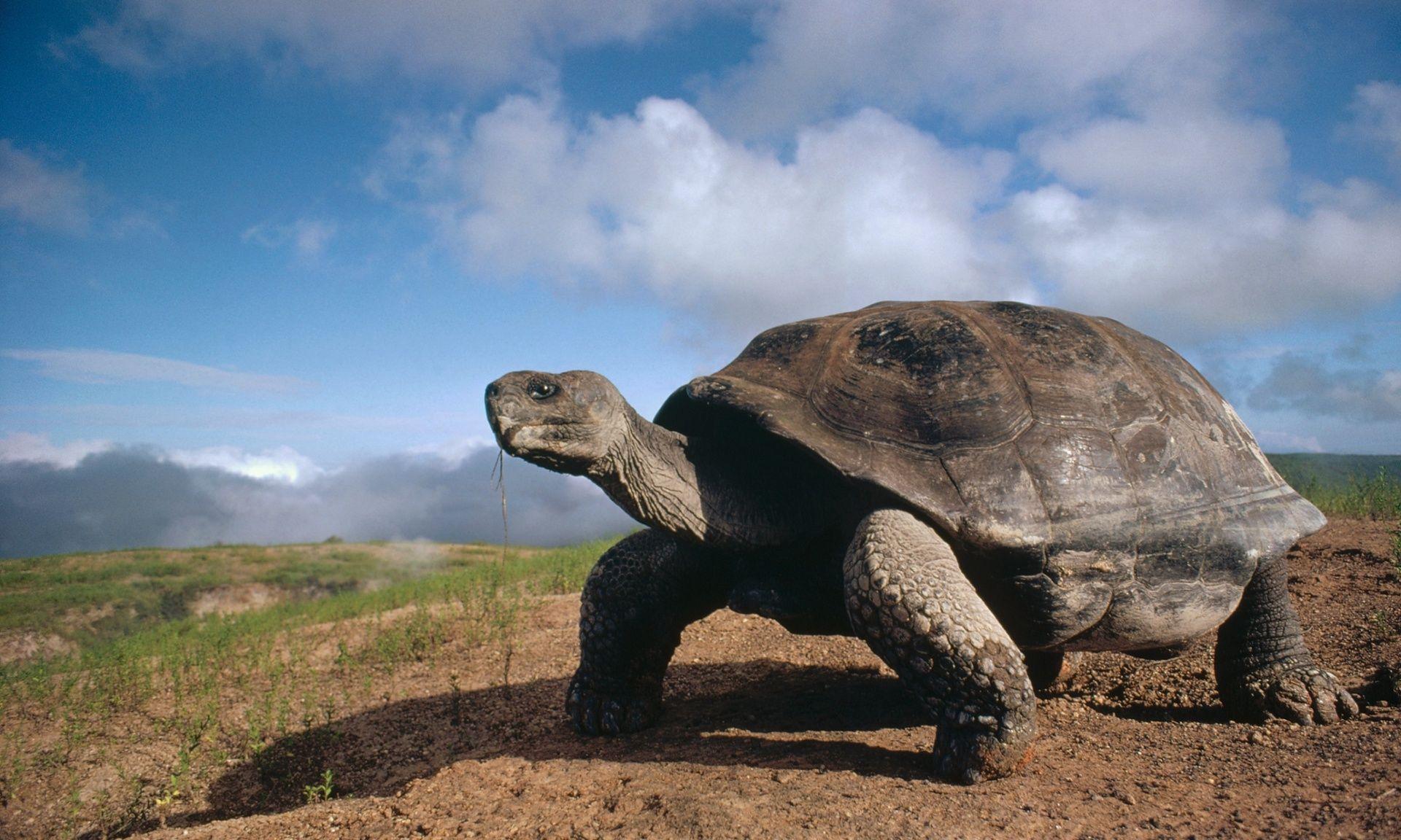 Shelf Life: Turtles and taxonomy | @GrrlScientist