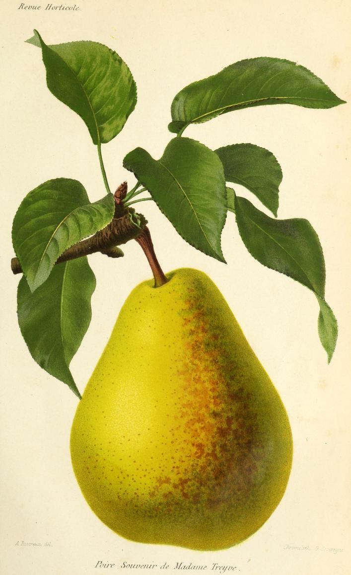 Anne 1869 - Revue horticole  - Biodiversity Heritage Library
