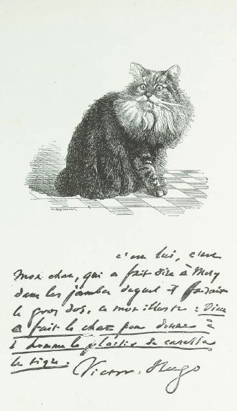 Pin On Art Le Chat Illustrations