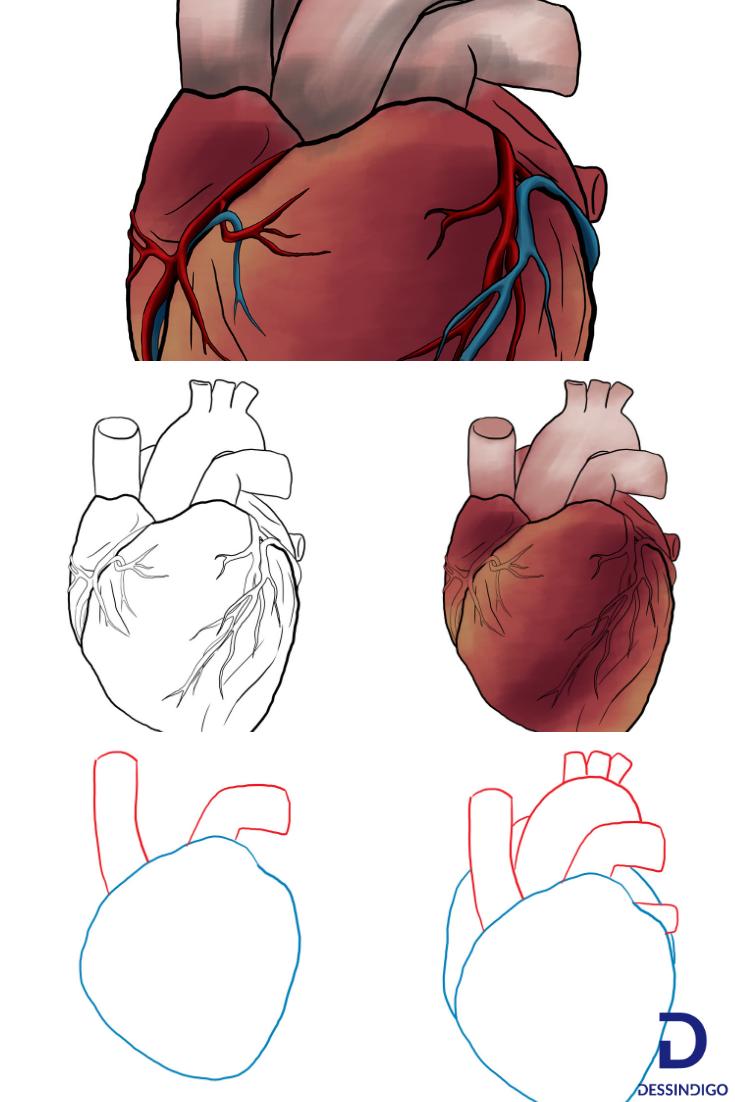 Comment Dessiner Un Coeur Humain Dessin Coeur Dessin Et