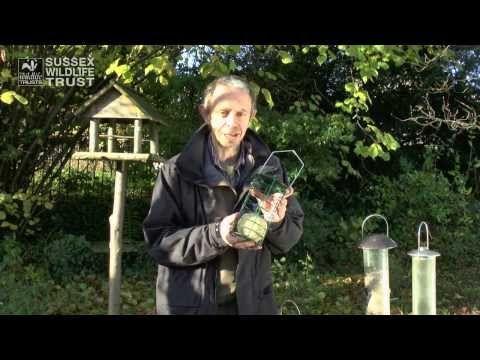 Bird Feeding Tips: food and feeders