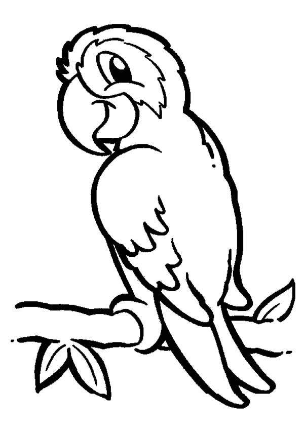Parrot On Branch Coloring Page Bird Coloring Pages