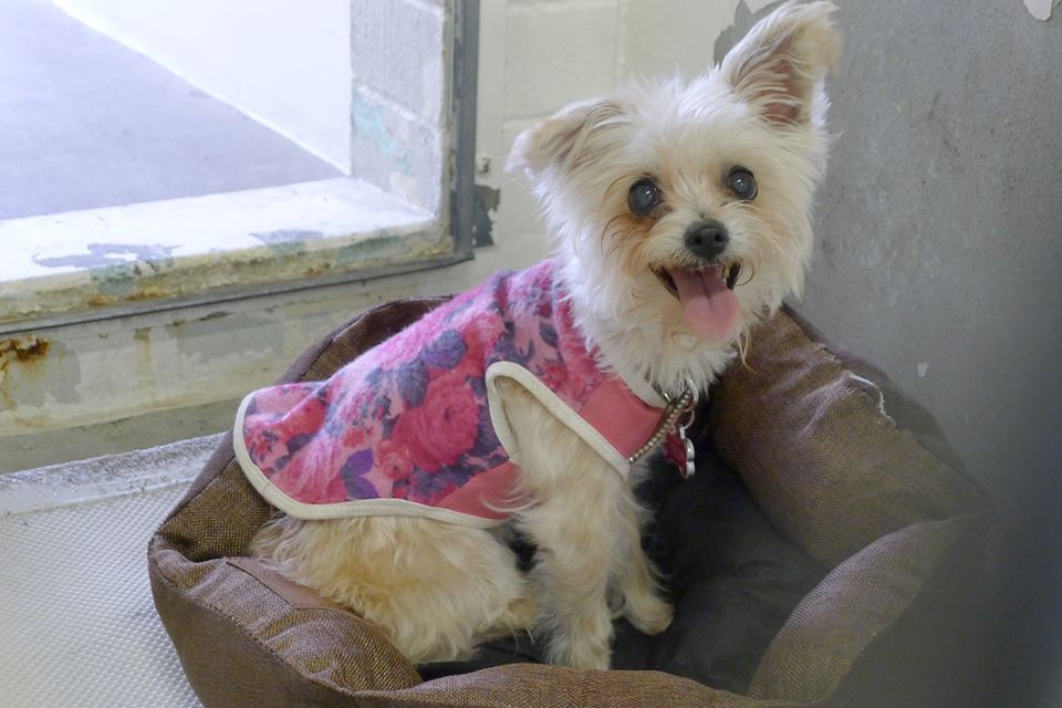 RESCUED She's 8 and so overwhelmed She is a beauty and