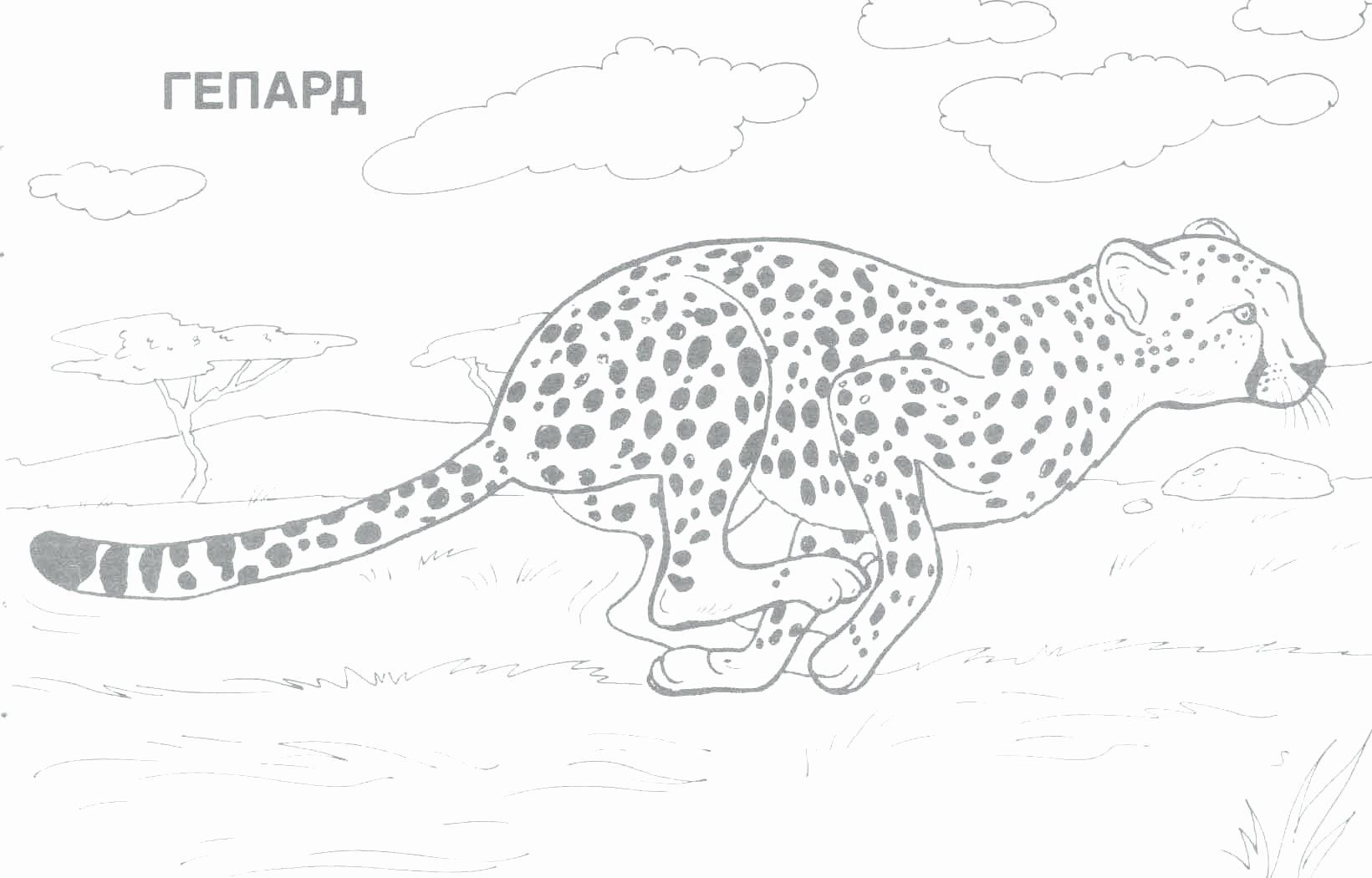 Pics For > Baby Safari Animal Coloring Pages | Pintura para ... | 1050x1641