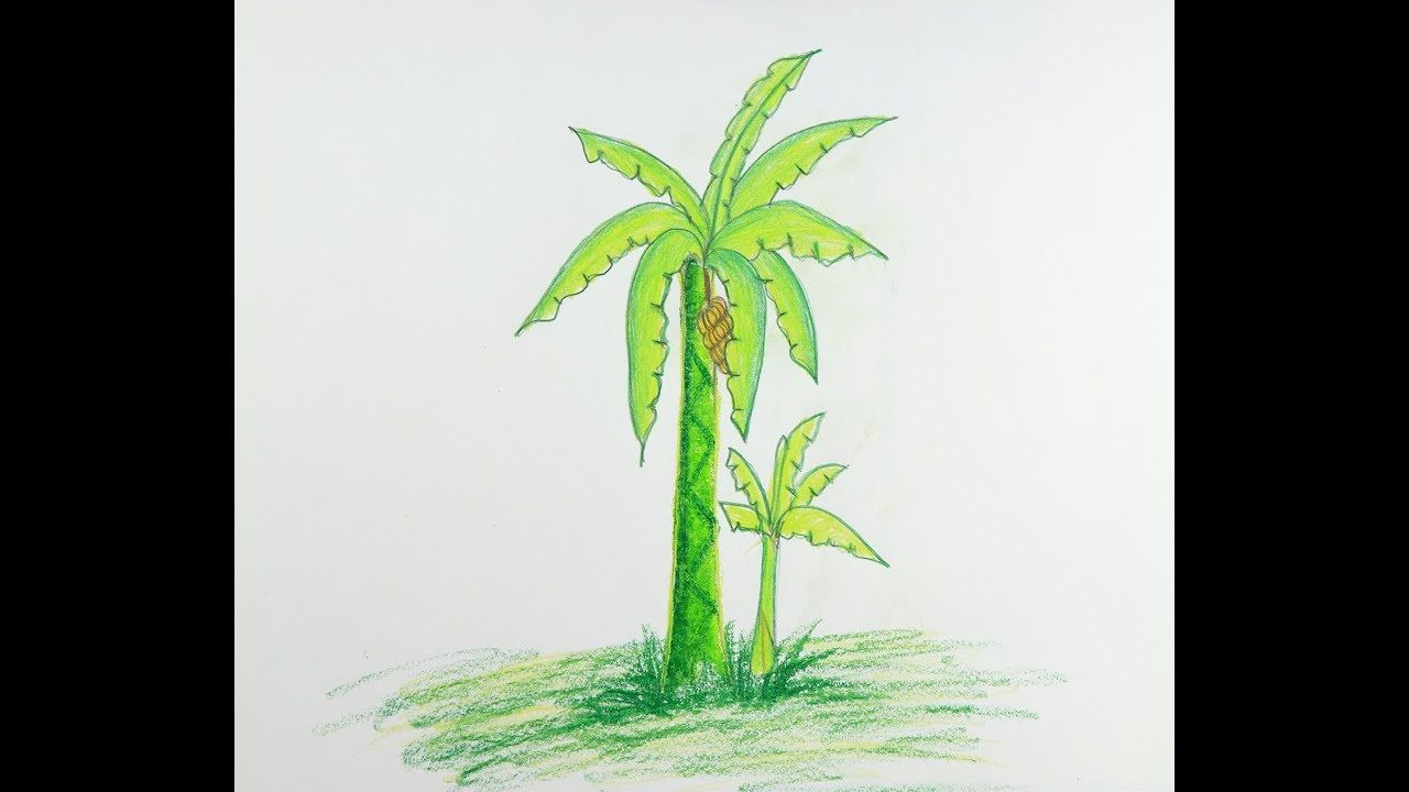 How To Draw A Banana Tree Step By Step Easy Drawing Rock Art