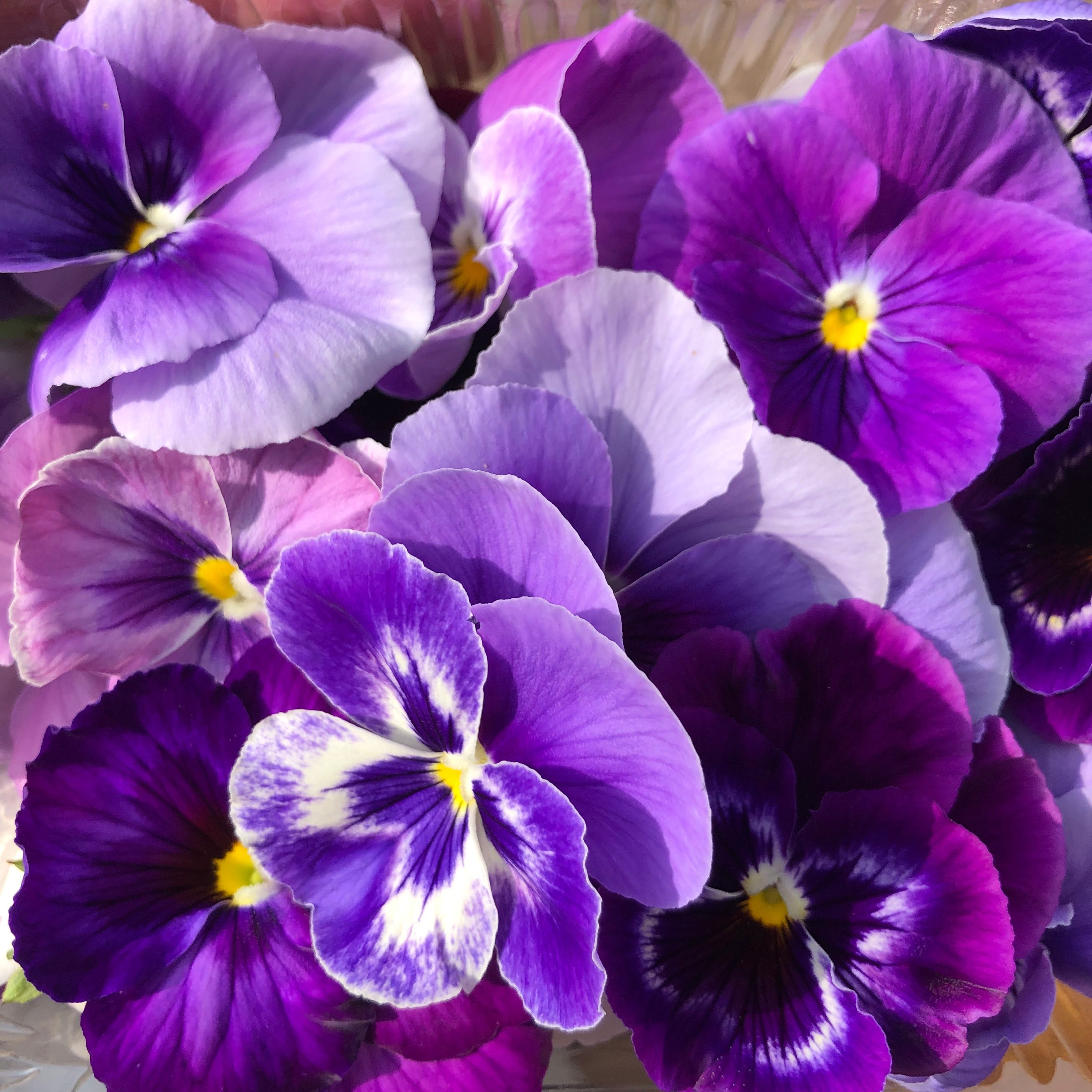 Edible Flowers Organic Pansies Organic Edibleflowers Soilassociation Certified Purple Biritishflowers Edible Flowers Purple Flowers Pansies Flowers
