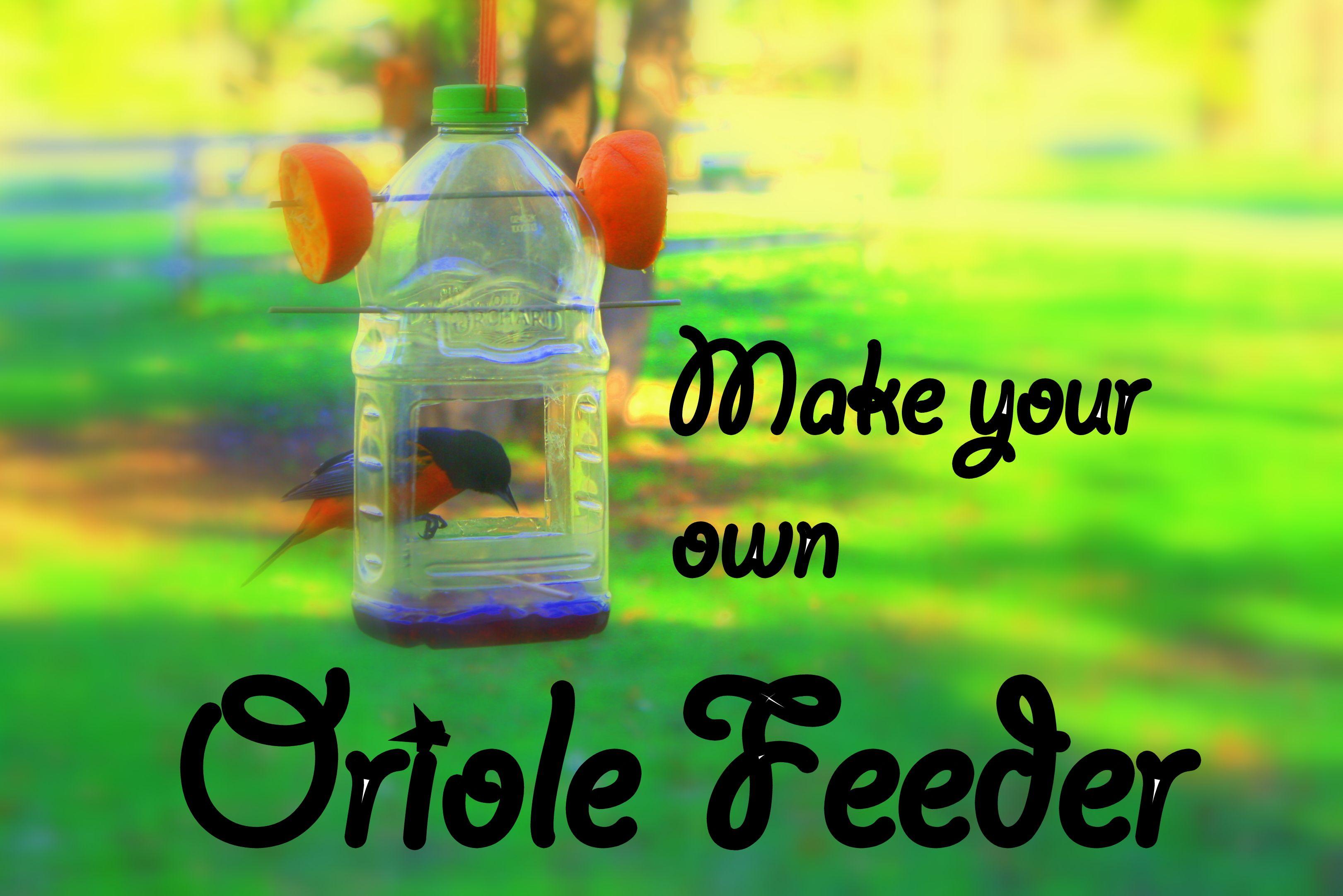 dp feeder amazon com outdoor perky jelly oriole wild pet garden bird best