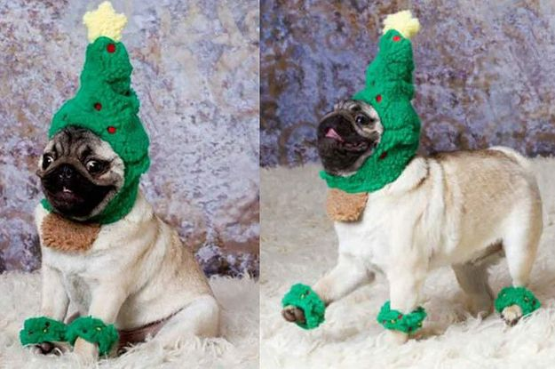 These festive pets in fancy dress will definitely be on Santa's nice list this year. Click to see our Buzzfeed!