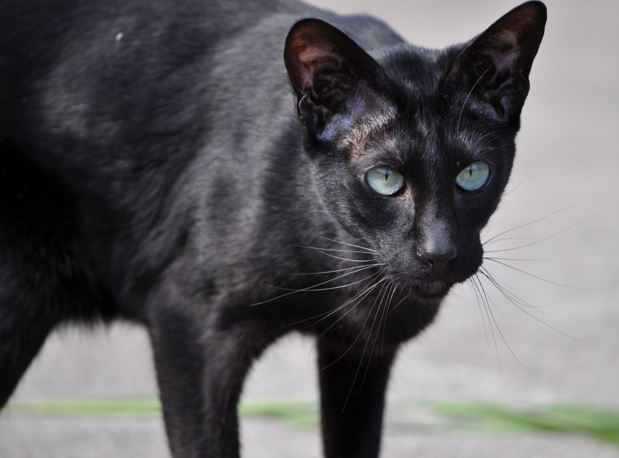 world images spike cat large