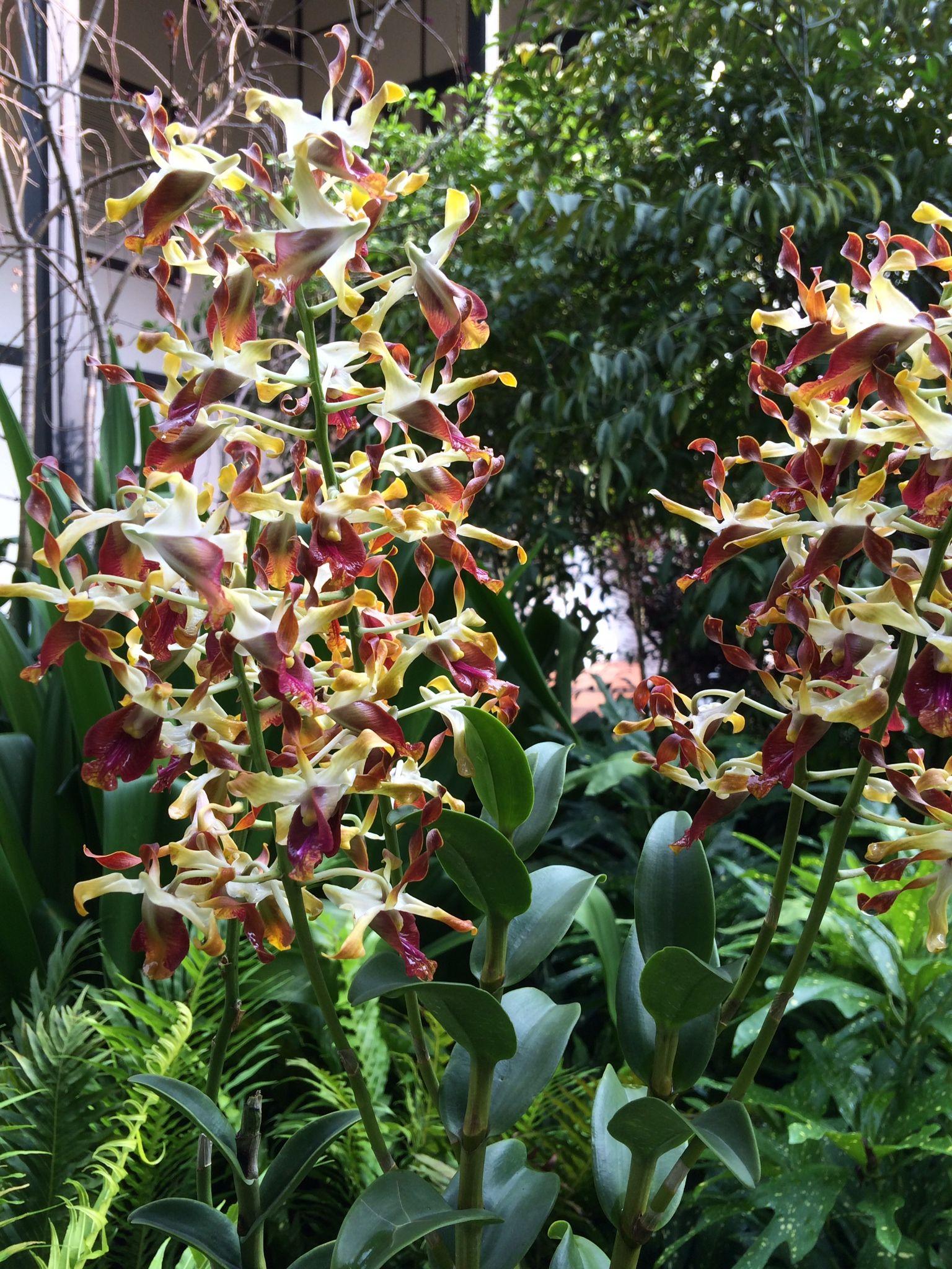 National Orchird Garden