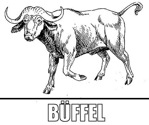 Malvorlage Buffel Afrika Tiere Malvorlagen Afrika