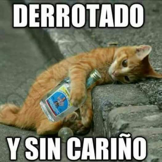 Pin De Beatriz Rocha En Borrachos Meme Gato Memes Animales Gatos Graciosos