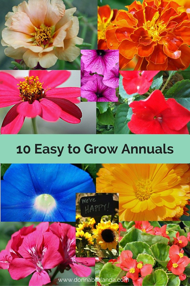 10 easy to grow annuals gardens garden landscaping and perennials 10 very easy to grow annuals for your summer flower garden izmirmasajfo