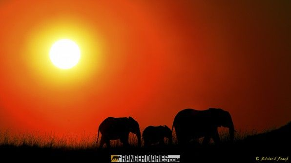 Gorgeous Pic Of Elephants In Thailand Nat Geo Lite