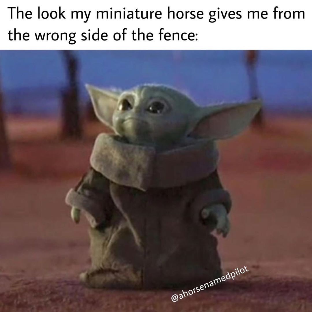 Pilot On Instagram It Was A Calculated Mistake Ahorsenamedpilot Horsesofinstagram Horselove Horselover Horse Yoda Meme Meme Template Memes So last night i was on skype with my friend and i was texting home the lyrics to prove me wrong by tyler joseph aka my bb. yoda meme meme template