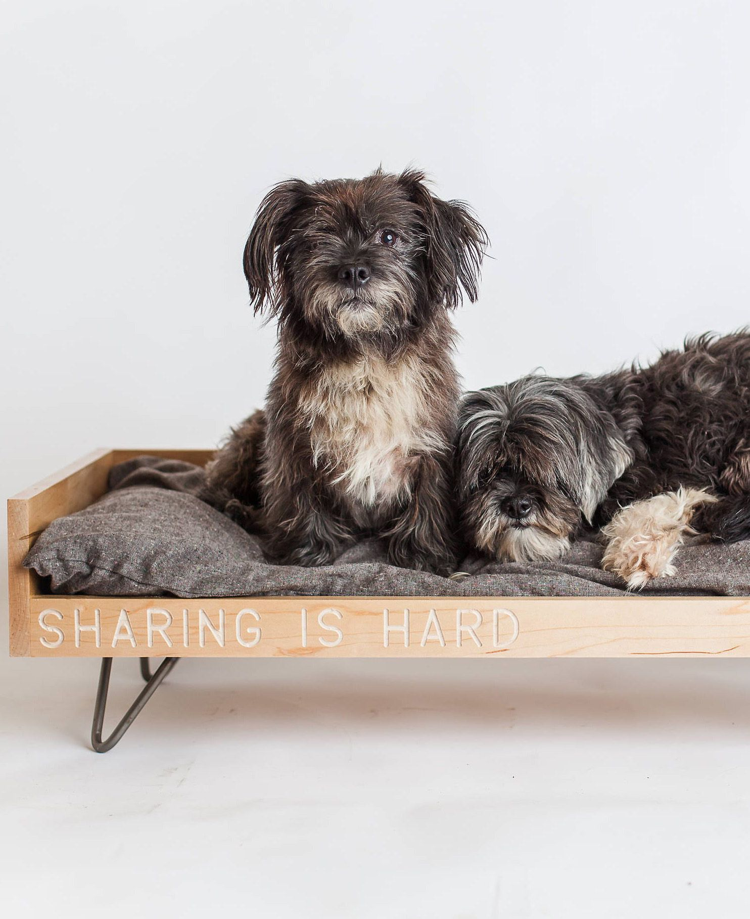Modern Minimalist Pet Bed Because Your Pet Is That Cool Dog