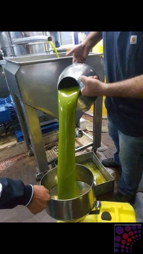 زيت زيتون من فلسطين عصرة اولى على البارد بكر Olive Oil Oils Olive
