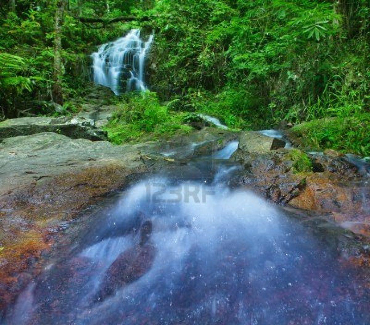 Mountain Travel Weather Tree Snow Rain Stock Photo - Image