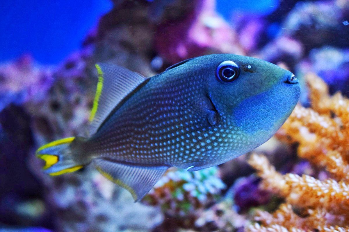 The Most Aggressive Fish In Your Reef Tank Https Www Reef2reef Com Threads What E2 80 99s The Most Aggressive Saltwater Fish Tanks Saltwater Aquarium Fish