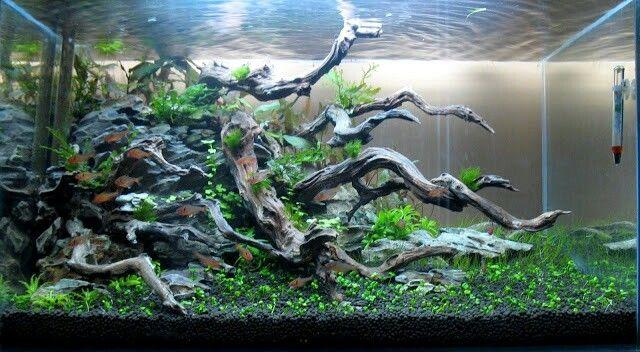 Beautiful aquascape in progress