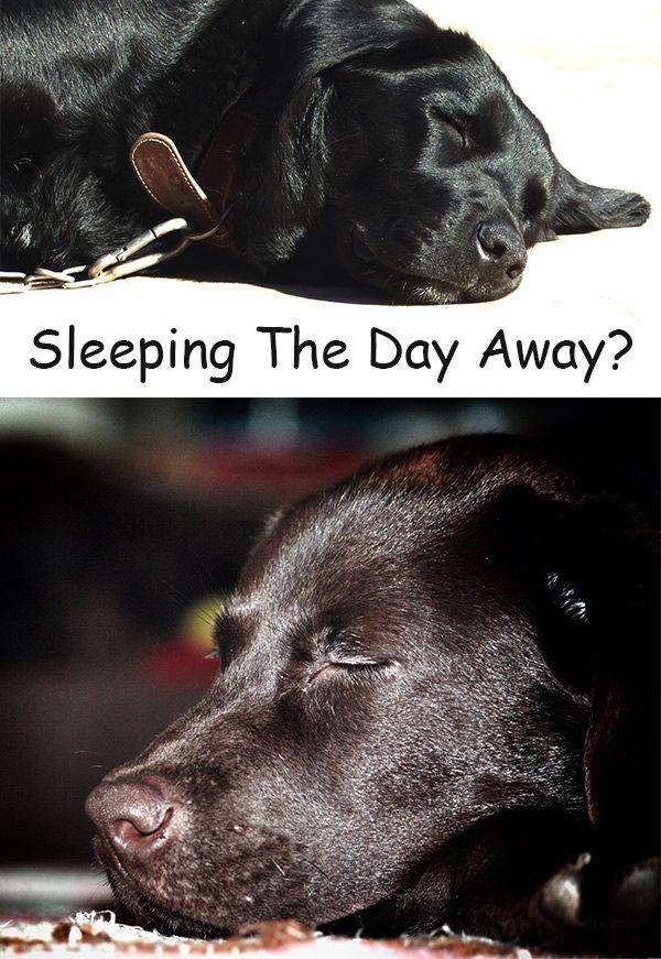How Long Do Dogs Sleep Is Your Dog Sleeping Too Much