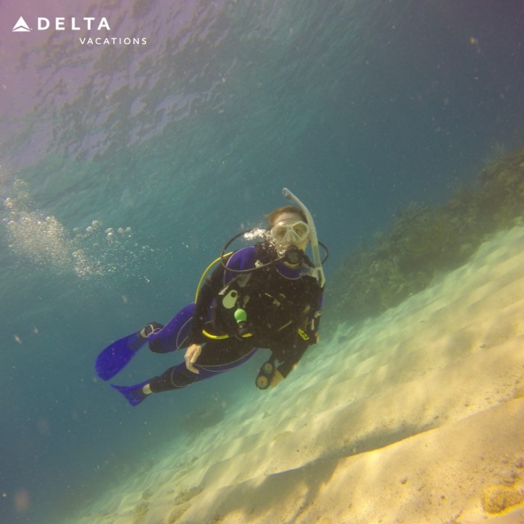 Life is better down where its wetter Book a dive trip
