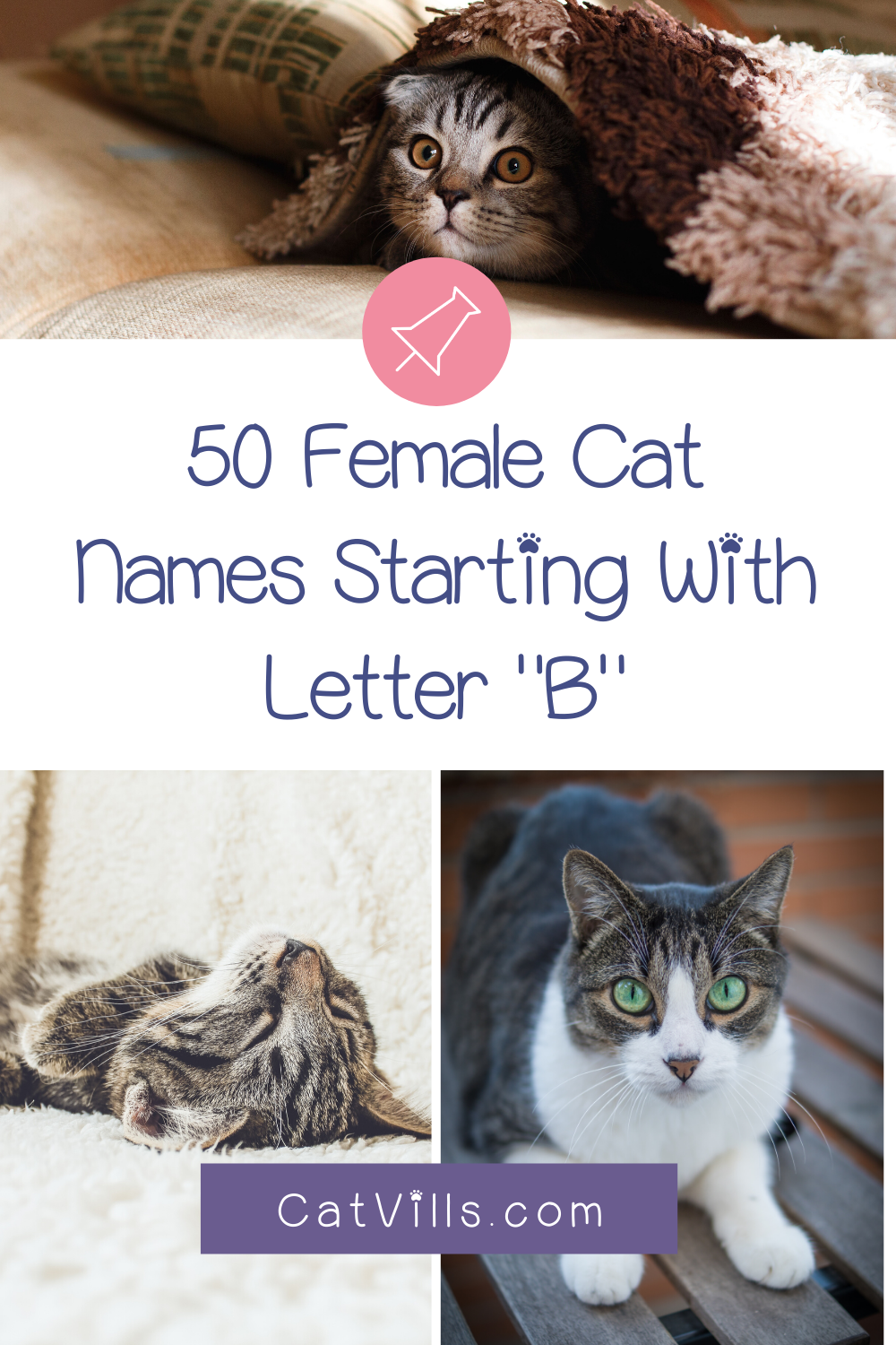 Cat Names Starting with B Cat names, List of cat names, Cats