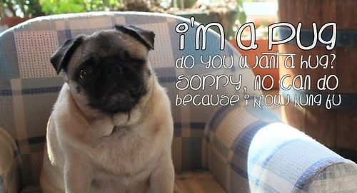 Puga Does Everything D Pugs Animal Lover Animals
