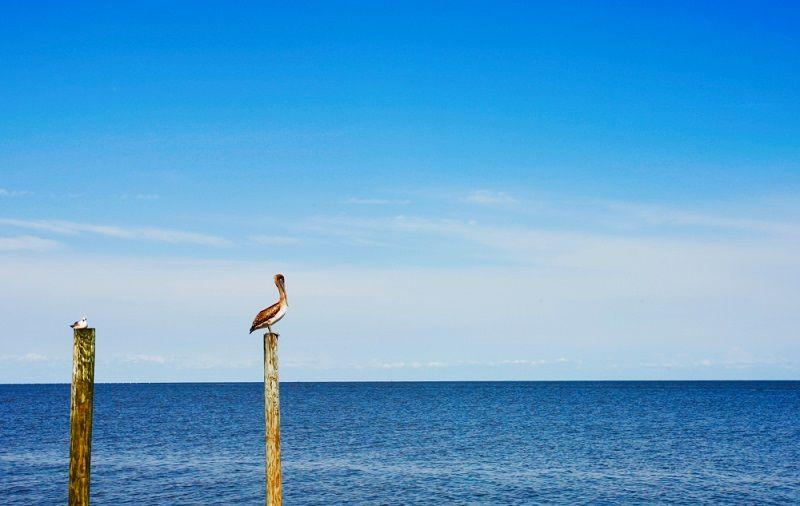 Florida's Cedar Key is a far cry from nearby Daytona and ...