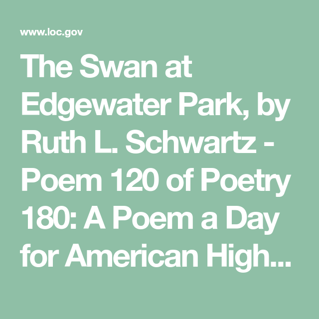The Swan At Edgewater Park By Ruth L Schwartz Poem 120