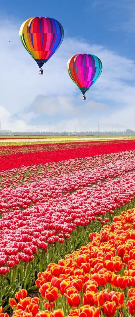 Keukenhof Gardens, Netherlands Hot air balloon