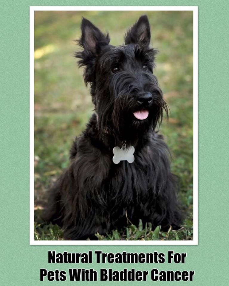 Transitional Cell Carcinoma in Dogs and Cats Holistic