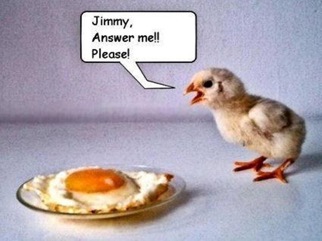 Wallpaper download jokes - Hilarious Ecards Free Funny Egg Wallpaper Download The Free Funny Egg Wallpaper