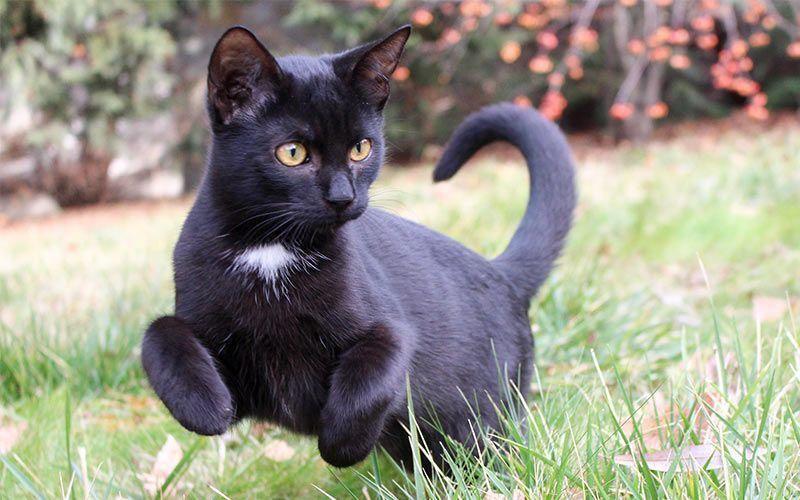 Black Cat Names Male Catsgrey Grey Cat Names Cute Cat Names Boy Cat Names