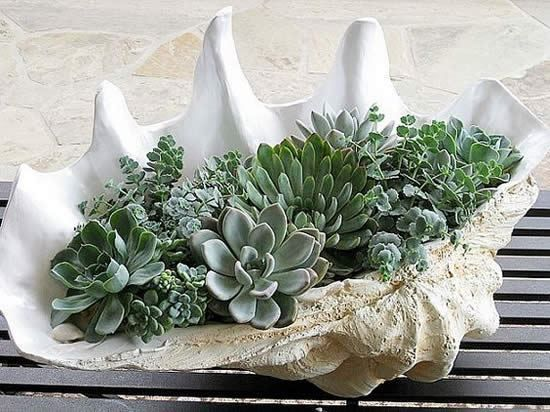 DIY Succulent planting in Shells – give a fresh splash in your decoration