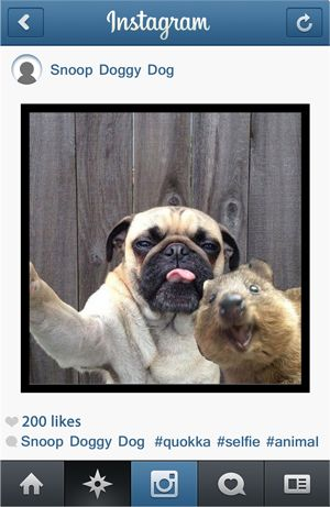 Let's Make Quokka Selfies for Animals | Cut Me Out - INDIE.COOL