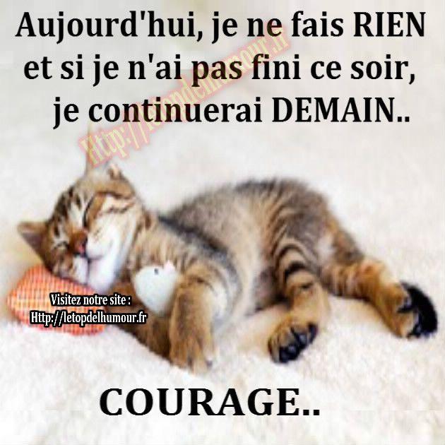 chat-oreiller-rien-demain-courage-dormir-finir- | Citations drôles chien,  Citation chat, Citation chien