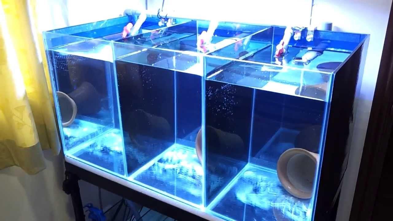 Aquarium fish tank setup - Clownfish Breeding Tank Setup