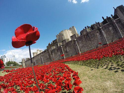 888,246 Poppies de cerâmica jorram como sangue da Torre de Londres na instalação 'Blood Swept Lands and Seas of Red' peIas comemorações do centenário da participação britânica na Primeira Guerra Mundial